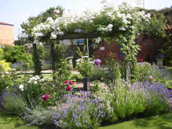 Beckingham Open Gardens in aid of Breast Cancer Awareness