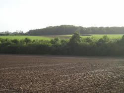 Tong's Wood in the distance